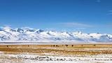 新疆天山天池、可可托海、五彩滩、喀纳斯湖、双飞8日游