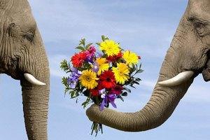 泰国普吉岛+皇帝岛+骑大象6日5晚跟团游,全程无自费。