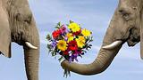 泰国普吉岛+皇帝岛+骑大象6日5晚跟团游