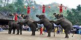 云南昆明+西双版纳+普洱公园+野象谷+中缅打洛边境4日游