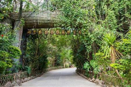 昆明+西双版纳+野象谷+原始森林公园+植物园4日跟团游