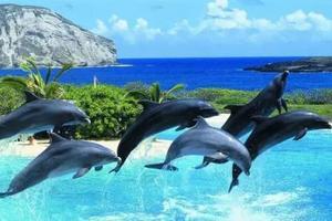 澳大利亚+新西兰+凯恩斯+墨尔本13日行程,寻觅野生海豚