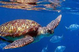 曼谷、普吉岛、斯米兰、珊瑚岛6晚7天跟团游