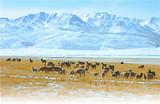 南寧到內蒙古神鷹宏浩冰雪世界、銀肯響沙灣雙飛五日游
