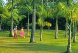 西双版纳勐仑植物园+原始森林公园+野象谷+勐泐大佛寺4天游