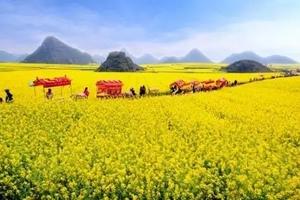 云南摄影游_昆明到元阳梯田 泸西城子古村 罗平油菜花6日游