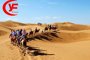 沙坡头、腾格里大漠景区、大漠奇石馆一日游|宁夏B线