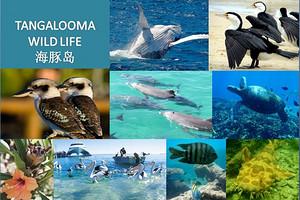 澳大利亚+海豚岛自然探秘亲子营11天