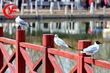 神奇宁夏、塞上湖城·半自助五日游
