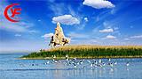 嘉峪关胡杨林旅游区、弱水金沙湾、黑城、怪树林、居延海两日游