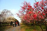春节苏杭上海扬州+迪士尼乐园双飞8日游