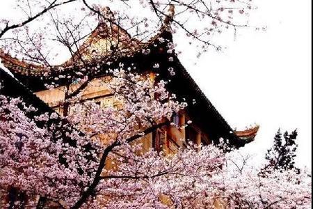 游武汉、赏樱花、登黄鹤楼、品美食纯玩二日游