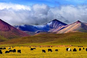 西宁青海湖塔尔寺+西藏拉萨布达拉宫、大昭寺、林芝双卧13日游