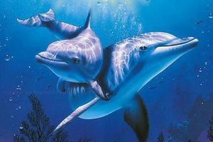 洛阳中赫海豚湾
