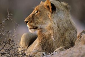 《战狼2》拍摄基地-非洲旅游行程-南非新花园大道9天
