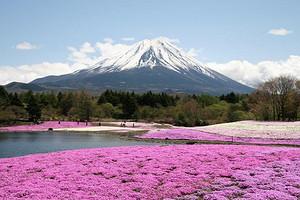 自在和风·本州古都赏樱半自助 6日游