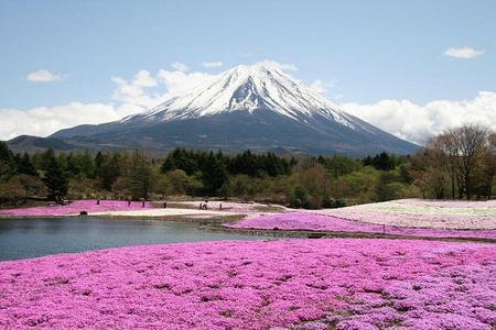 自在和風·本州古都賞櫻半自助 6日游