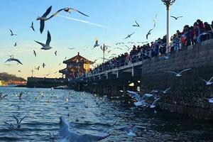 【蓝色海岸】-青岛、乳山、威海、蓬莱、烟台大金石滩双飞5天