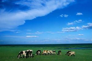 呼伦贝尔大草原额尔古纳湿地童话世界白桦林中俄边境满洲里