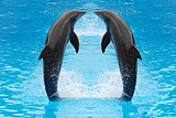 羅源灣海洋世界|羅源海洋館門票|羅源海洋王國