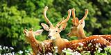 福州到广州长隆|长隆野生动物世界、欢乐世界双动3日游