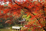 南京有哪些好玩的?南京栖霞山赏秋+瘦西湖双飞3日游