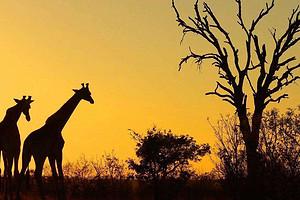 福州去南非需要注意什么?南非新华园大道、观鲸9日游