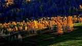 济南到新疆旅游_南疆、天池、吐鲁番、天山大峡谷、胡杨林8日游