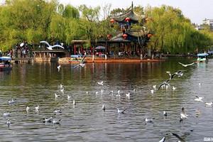 济南出发到市区景点一日游  大明湖+趵突泉+泉城广场+芙蓉街