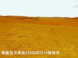 仙居天臺縣客人從北戴河租車赴承德壩上草原三日游