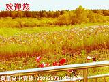 嵊泗縣岱山縣游客到北戴河參加當地組織的壩上草原三日游