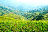 桂林周边 龙脊梯田金坑大寨 黄洛红瑶寨 2日游