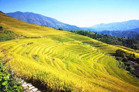 桂林周边 龙脊梯田.金坑大寨 1日游