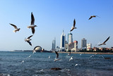 青岛、威海、蓬莱、旅顺、大连双飞6日游