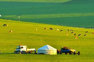 玩转内蒙:希拉穆仁草原、库布齐沙漠、呼市双卧5日游