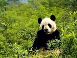 佛坪熊猫谷精华一日游