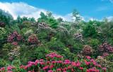 木王国家森林公园2日游