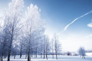 哈尔滨 海拉尔 满洲里 呼伦贝尔 北极村双飞8日游