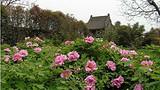 ◆西安九华山阿姑泉牡丹苑风景区(AA级旅游