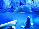 ◆西安曲江海洋极地公园(AAAA级股票开户类型选什么景区)