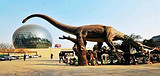 ◆陕西自然博物馆(AAAA级旅游景区)
