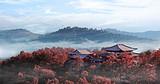 ◆陕西黄陵国家森林公园(国家AAAA级旅游景区)