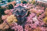 ◆西安青龙寺(密宗祖庭,AAA级旅游景区)