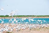 ◆榆林神木红碱淖风景区(国家AAAA级旅游景区)