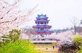 杭州上海乌镇无锡四日游-C线_西湖、上海市区、乌镇、鼋头渚