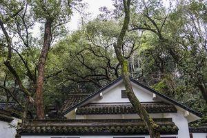 < 杭州出发 >【杭州、西塘二日游】:西湖、灵隐寺、