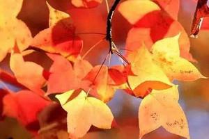 秋季赏枫旅游,丹东天桥沟精品一日游_包含5D玻璃桥