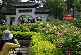 2012洛阳牡丹花会&清明节去河南洛阳看牡丹&洛阳牡丹花卉节